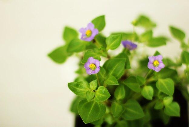 ۵ نکته برای نگهداری از گیاهان آپارتمانی