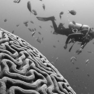بهترين بازى هاى گوشى هاى هوشمند برای اینکه قدرت مغزتان را بسنجید