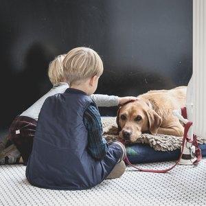 عقیم سازی سگ