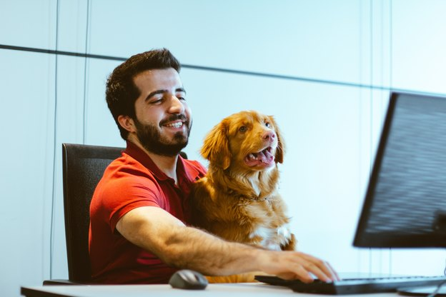 تربیت سگ: دست تکان دادن
