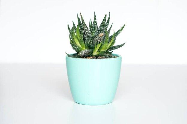 تقویت و کود دهی گیاهان آپارتمانی