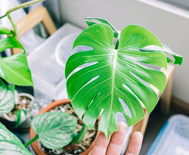 آموزش نگهداری از گیاهان آپارتمانی و نکاتی که باید بدانید