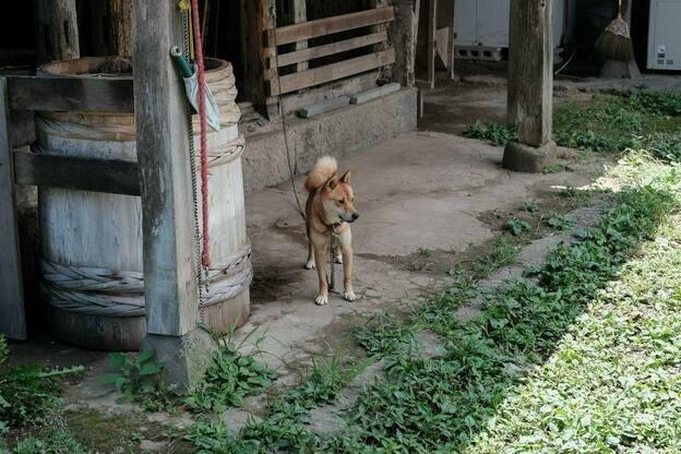 راهنمای سنجاق برای آموزش محل ادرار سگ ها
