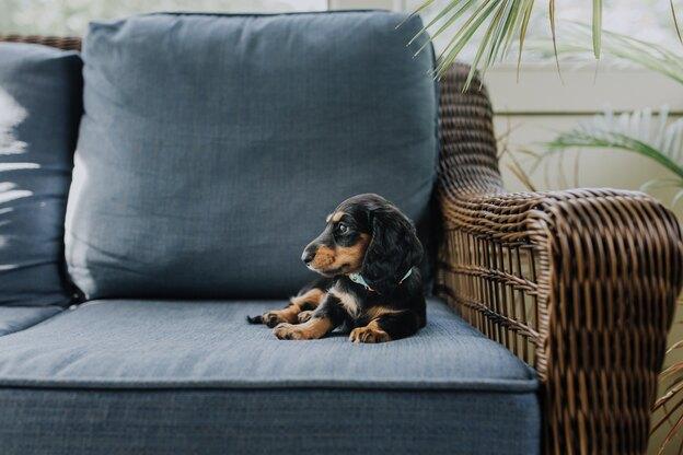 خانه تکانی بهاره خانه ای که سگ دارد