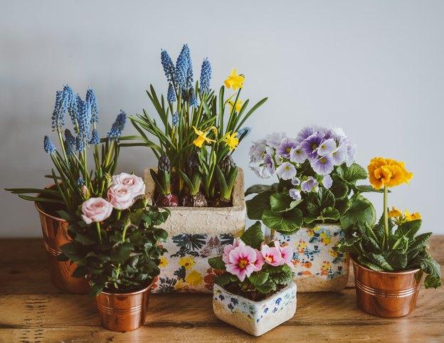 شناسایی و از بین بردن شته گیاهان آپارتمانی