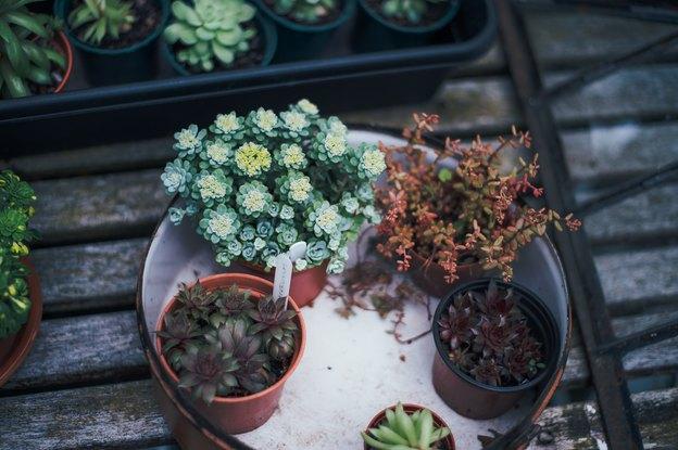 ۱۲ گلی که عمرا بتوانید بخشکانید