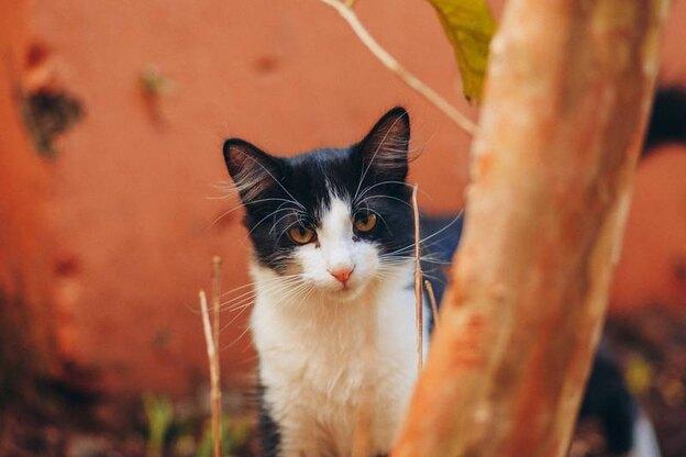 آیا واکسیناسیون گربه ضروری است؟