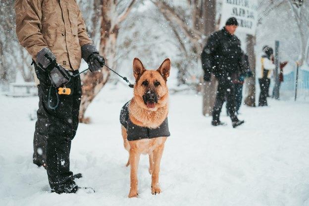 برترین نژادهای سگ نگهبان