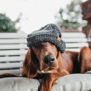 چگونه بهترین نژاد سگ را انتخاب کنیم؟