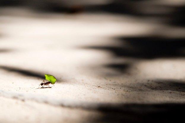 مایع ظرفشویی علیه مورچه ها