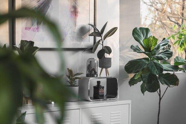۶ نشانه مبنی بر سرحال نبودن گیاه آپارتمانی