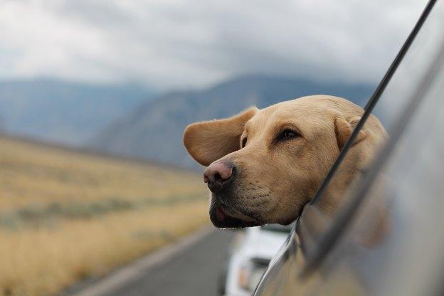 بهترین نژادهای سگ برای صاحبان تازه کار