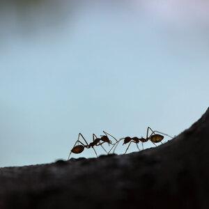 مورچه زیاد در خانه نشانه چیست؟