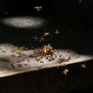 سمپاشی خانه برای کنترل حشرات: موریانه ها