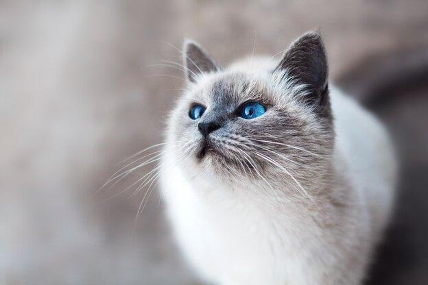 سم خانگی کک گربه