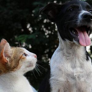 کدام نژاد سگ با گربه دوست می شود؟
