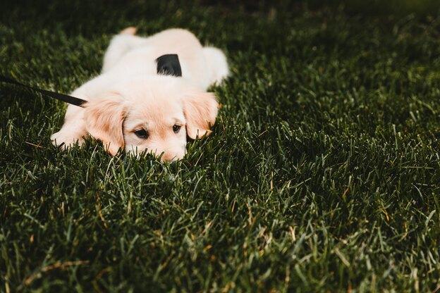 راهنمای نگهداری سگ: بوکشیدن