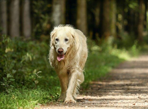 همه چیز درباره واکسیناسیون سگ ها