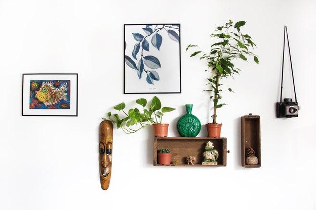 رشد گیاهان آپارتمانی