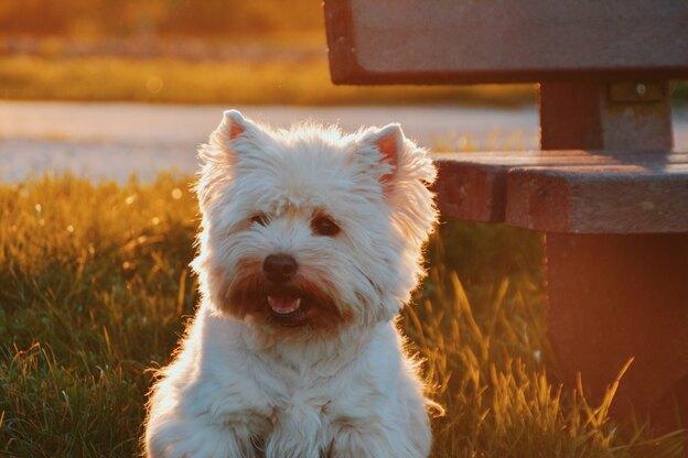 بهترین نژاد سگ خانگی با هزینه نگهداری کم