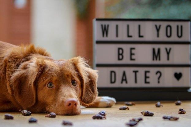 راه هایی برای کمک به سگ تان برای مستقر شدن در خانه ی جدید