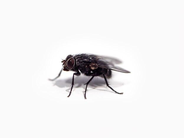 نحوه دور کردن حشرات از خانه