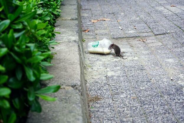 چطور از شر موش های خانه خلاص شویم تا دیگر به خانه برنگردند؟