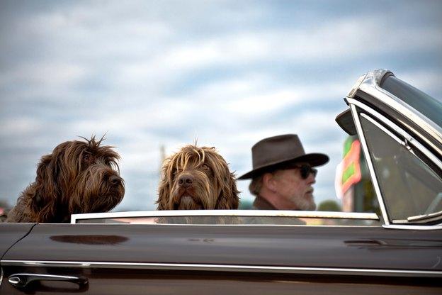 25 نژاد سگ با اندازه متوسط