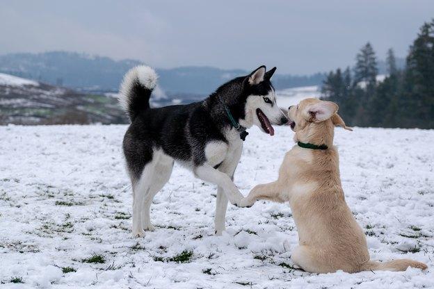 آموزش تربیت سگ: دست دادن