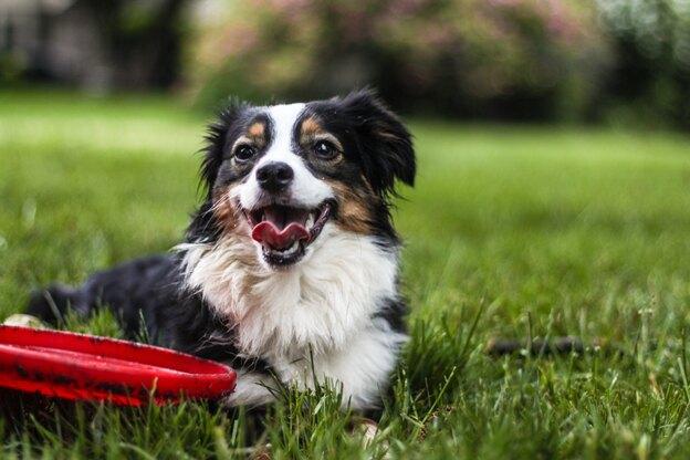 آموزش تربیت سگ: بازی کردن