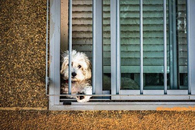 ۱۰ تا از بهترین نژاد سگ های کوچک که به مراقبت کمی نیاز دارند