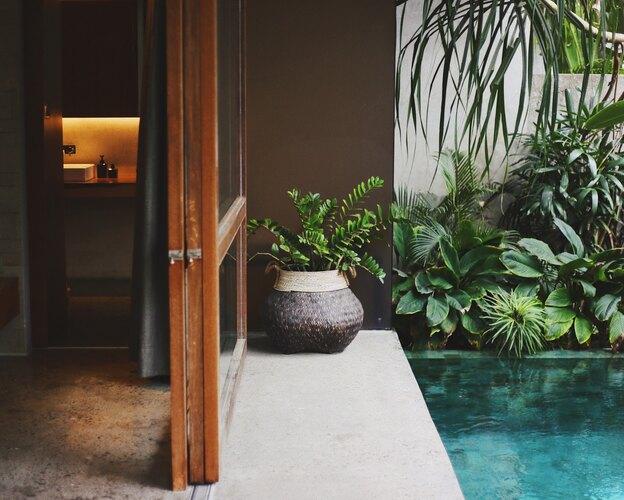۱۷ درختچه آپارتمانی برای هر اتاق خانه