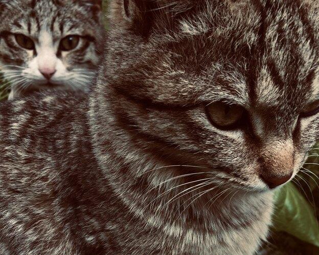 مراقبت و نگهداری از گربه
