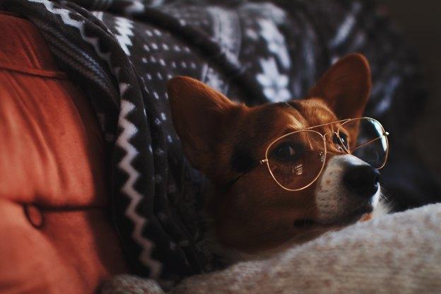 بهترین نژادهای سگ برای افراد پر مشغله (تنبل)