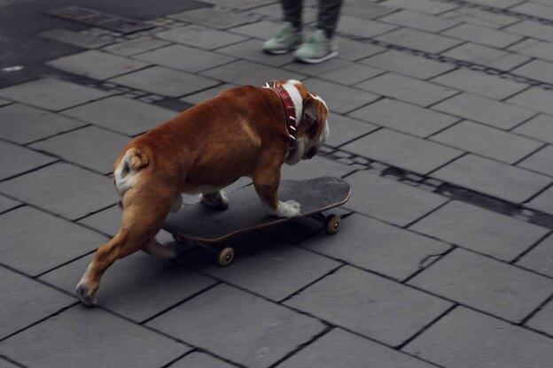 شیوه رهایی از شر کک روی بدن سگ ها و جلوگیری از آن