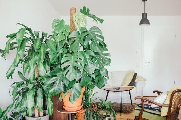 راز نگهداری گلهای آپارتمانی چیست؟