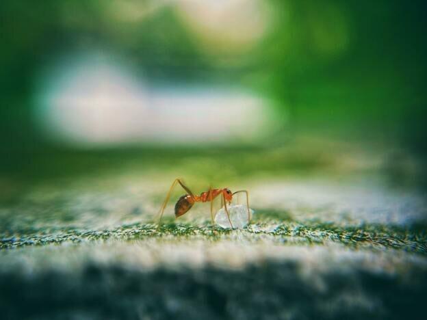 نحوه از بین بردن مورچه های نجار بدون نیاز به سمپاشی
