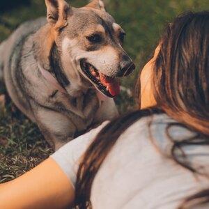 چگونه سگ را به خود وابسته کنیم؟