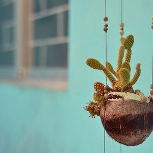 راهنمای سنجاق در نگهداری از گیاهان آپارتمانی
