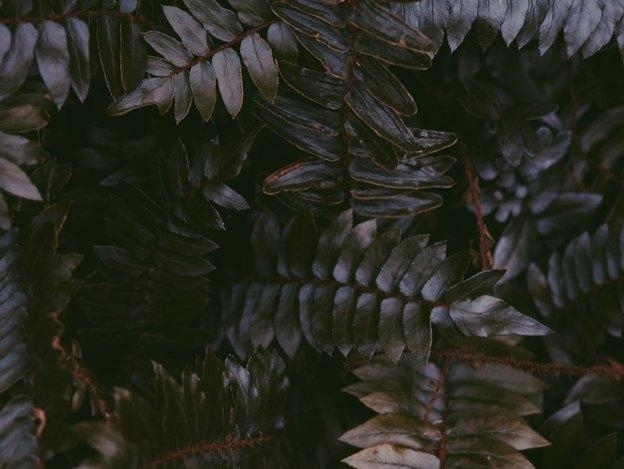 گیاهانی که در تاریکی رشد می کنند