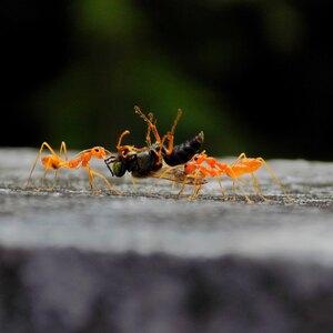 نحوه رهایی از شر مورچه ها در خانه و حیاط
