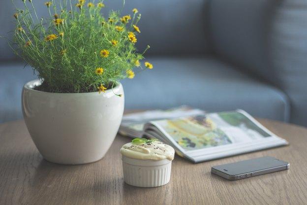 راهنمای گیاهان آپارتمانی سنجاق مگ برای تهیه کود ارگانیک