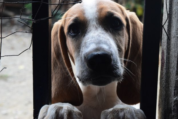 استفاده از روغن نارگیل برای سگ ها