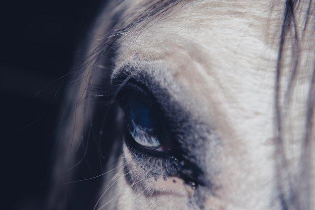 حیوانات درمانگر کدامند؟