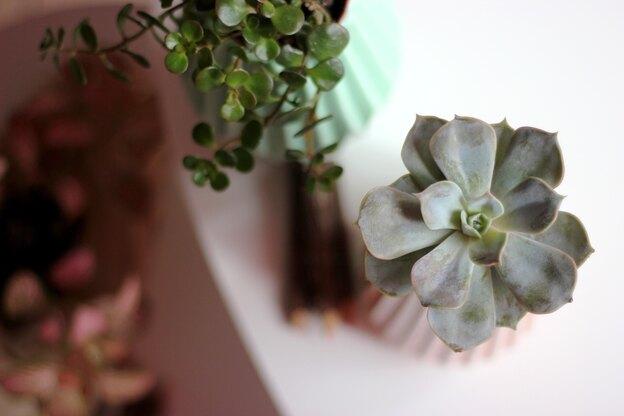 چه گیاهانی در آب رشد می کنند؟