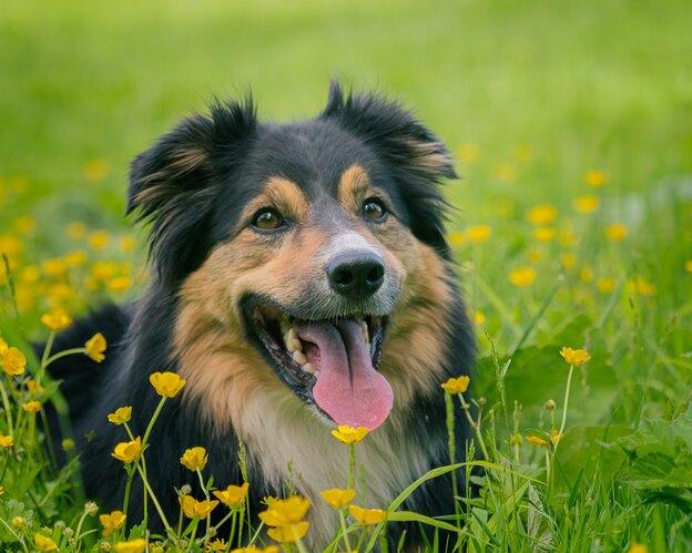 روش های غیر سمی برای رهایی از شر کک روی بدن سگ