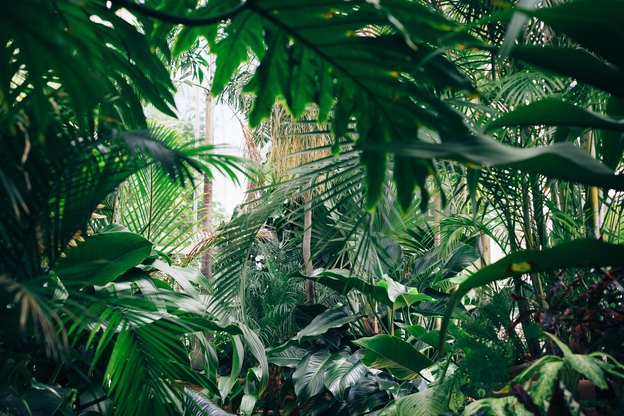 نقش گیاهان خانگی در بهبود کیفیت هوا