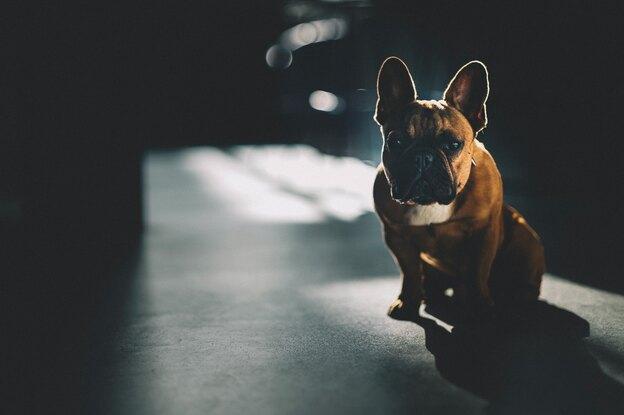 ۵ مزیت واکسیناسیون سگ ها