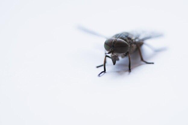 راهنمای کامل حشرات خانگی با عکس