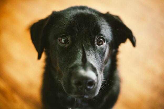 راهنمای جامع نگهداری و تربیت سگ
